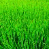 Fresh grass Background — Stock Photo