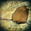 Grunge Background with a Leaf — Stock Photo #65809523