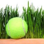 Tennis Ball on Grass Background — Stock Photo #66941097