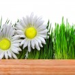 Grass and Flowers — Stock Photo #67518475