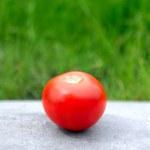 Tomato on the Grass Background — Stock Photo #69758249