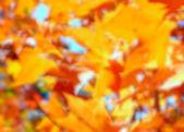 Blurred Autumn Background — Stock Photo