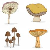 Different forest mushrooms. — Stock Vector