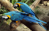 Beautiful parrots sitting on a branch — Stock Photo