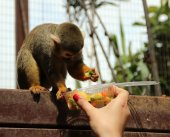 Funny monkey eats — Stock Photo