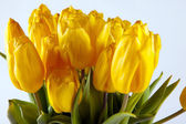 Bouquet of yellow tulips, beautiful background for congratulations — Stock Photo