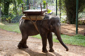 The beautiful Indian elephant with a seat for passengers costs waiting for people . India Goa — Stock Photo