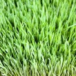Grass — Stock Photo #66973737