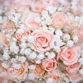 Soft pink wedding bouquet with rose bush and little white flower — Stock Photo