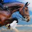Bay horse in jumping show against blue sky — Stock Photo #59363049