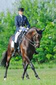 Advanced Dressage test: collected trot — Stock Photo