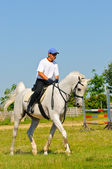 Rider on white arabian horse in the field — Stock Photo