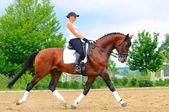 Girl on bay dressage stallion — Foto Stock