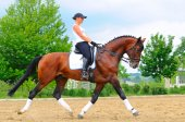 Girl on bay dressage stallion — Stockfoto