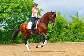Girl on bay dressage stallion — Stock Photo