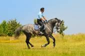 Rider on gray horse — Stock Photo