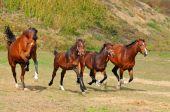 Herd of horses in the field — Stock Photo