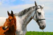 Mare and foal on the background of blue sky — Stock Photo