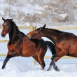 Two young horses playing on the snow field — Stock Photo #60660537