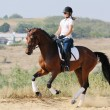 Equestrianism: rider on bay dressage horse, going gallop — Stock Photo #60660949