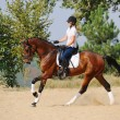 Equestrianism: rider on bay dressage horse, going gallop — Stock Photo #60660957
