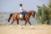 Equestrianism: rider on bay dressage horse, going trot — Stock Photo