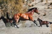 Herd of horses in autumn field — Zdjęcie stockowe