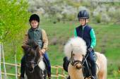 Two boys with pony — Stock Photo
