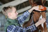 Young boy is grooming the horse — Stock Photo