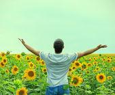 Muž v poli slunečnic — Stock fotografie