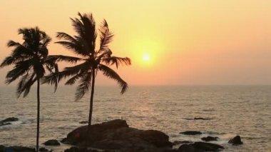 Silueta de los árboles de palma al atardecer — Vídeo de Stock