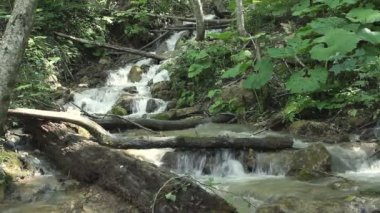 Clean fresh water of a forest stream running over rocks — Stock Video