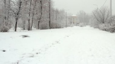 Park alley in a snowy winter day — Stockvideo