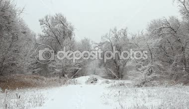 Snowfall in a winter park with snow covered trees — Stockvideo