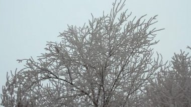 Branches of trees covered with hoarfrost on a cloudy day — Stok video