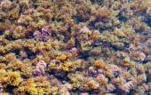 Abstract Background - Multicolor herbal seaweed on the beach. My — Stock Photo