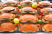Dungeness crab — Stock Photo
