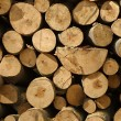 Log Pile — Stock Photo #57743899