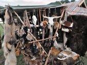 Hanging animal skulls and fur in a medieval market — Foto de Stock
