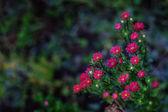 свежесть цветов — Стоковое фото