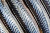 Fresh fish mackerels — Stock Photo