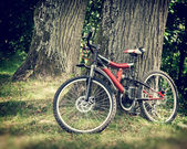 Fahrrad im wald — Stockfoto