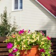 Flowerpot with petunia flowers near a home — Stock Photo #52916787