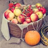 Apples in wicker basket, pumpkin, marrow and rowan berry — Stock Photo