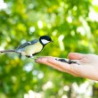 Bird takes a seed from the human hand — Stock Photo #54457961