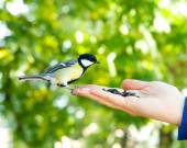 Bird takes a seed from the human hand — Stock Photo