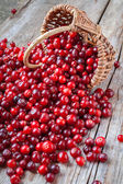 Fresh red cranberries, berries and  basket on old table — Stock Photo