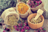 Healing herbs in hessian bags, mortar with chamomile on rustic t — Stock Photo