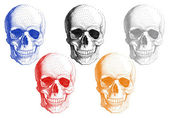 Human skulls, vector set — Stock Vector