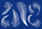 Flying feathers, vector set — Stock Vector